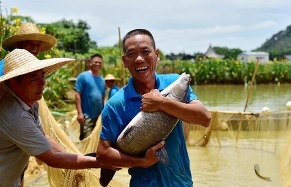 佛山:壮汉抱鱼如同抱娃 30多公斤桑果鱼一秒将人撞倒