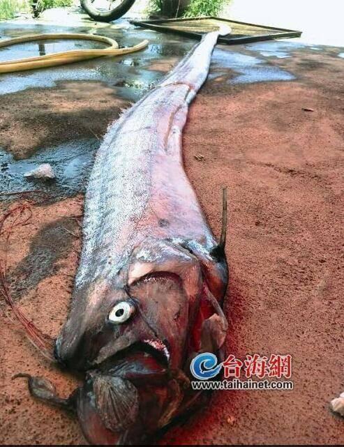 随后,他把它捡回村里,村民从未见过这种鱼,林先生想把它卖掉,结果没人
