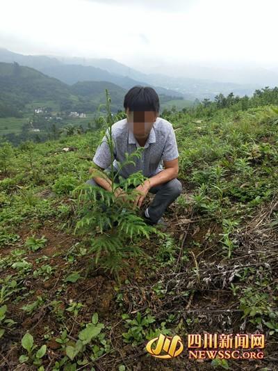 顺走天价花 新蝴蝶兰值2000万 泸州男子砍红豆杉做炊具 补栽仅三亩