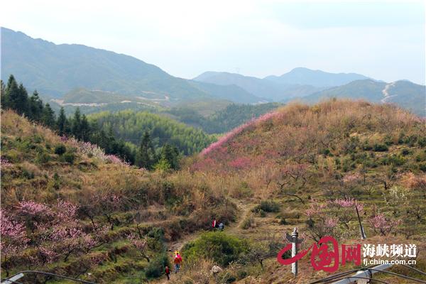 油用林业召开v林业现场在寿宁装袋国家牡丹种植定做图片