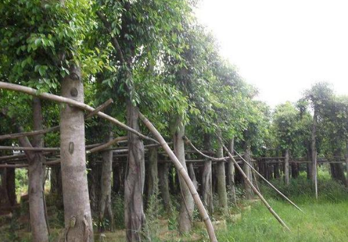 福建省规范省级以上财政林业专项资金使用