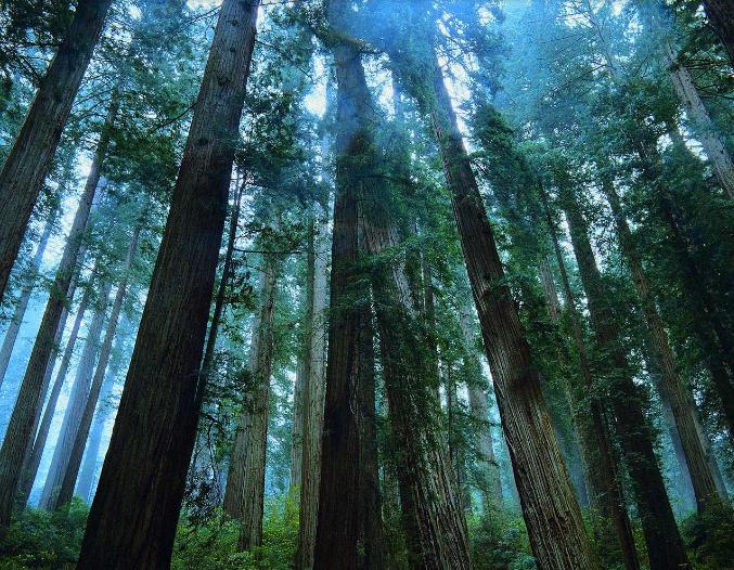 福建森林覆盖率65.95% 居中国首位