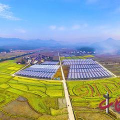 彩绘油菜观光园助力福建浦城大米产业振兴