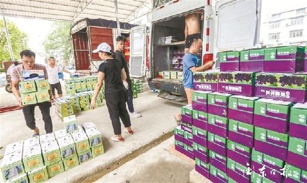 福安:产业发展助力乡村振兴