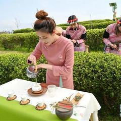 福州春茶节线上开采