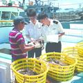 东山:海岛渔港变迁见证两岸融通